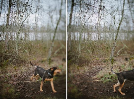 Dog Running.