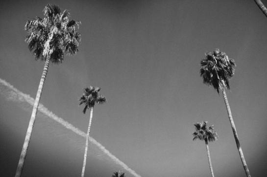 black and white arizona
