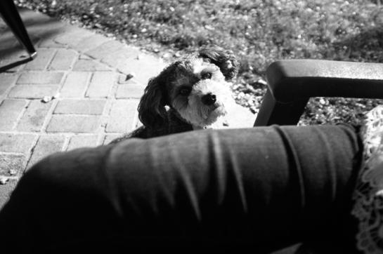 Dog Begging