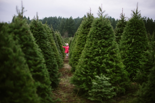 christmas tree farm girl in pink coat