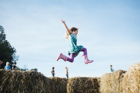 corn maze pumpkin patch jump